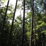 伐採&キャンプ生活 土地の開拓編 第7話