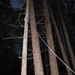 「小径木の伐採」木にロープを掛けるのに手こずる~開拓編 第10話