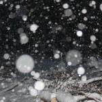 雪で強制退去となりました。~土地の開拓・伐採