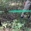 ハンドウインチを使って「トールベビー」を伐採~ツタが絡んだ木の怖さを知った。