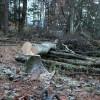 装備強化!ローププーラー(ROPE PULLER)の導入~伐採2日目