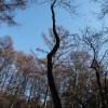 偏芯木スラッシュA&Bを伐採する