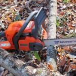 ボスキャラ「サニー」の伐採に挑む~山林の開拓