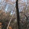 失態!ノーマークの小木の長さを見誤りピンチに。~土地の開拓・伐採
