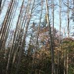 開拓キャンプ3日目~伐採計画を練る