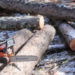 年末の新月期伐採のつづきです。
