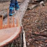 アリ退治~腐った木が蟻の巣に 殺虫剤なしで蟻を退治する方法を考える~伐採3日目