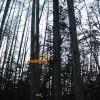 もしも伐採中にお腹を壊したら~トラブル発生、安全エリアまで退避せよ。