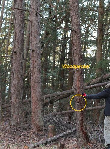 woodpecker01
