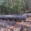 「コロ」と「てこ」を使って重たいものを動かす方法。伐採後の丸太の片付け