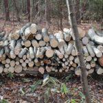 即席の薪置き場の作り方とシロアリ対策